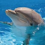 Крупнейший дельфинарий России