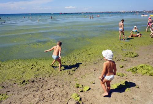 Цветение моря в Анапе