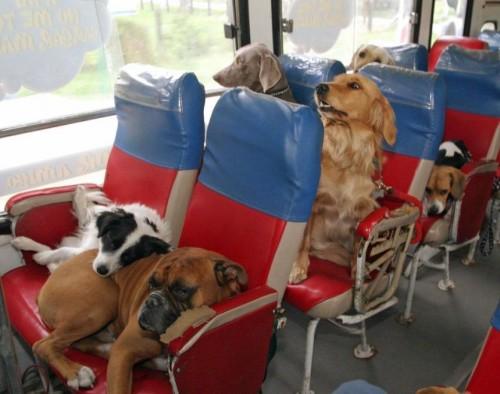 Как перевезти собаку в Англию