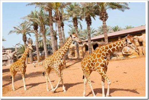 Зоопарк в Абу Даби